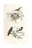 Garden Warbler  Redstart and European Stonechat