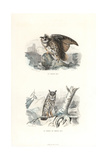 Eurasian Eagle-Owl and Long-Eared Owl