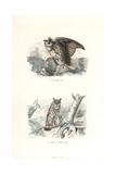 Eurasian Eagle-Owl and Long-Eared Owl