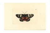 Episteme Moth  Episteme Lectrix Szechuanensis