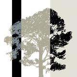 Oak Stripe