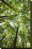 Woods  Shenandoah National Park