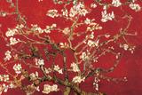 Almond Blossom - Red Poster par Vincent Van Gogh