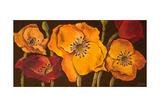 Dazzling Poppies II (Black)
