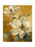 Magnolias Aglow at Sunset I