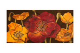 Dazzling Poppies I (Black)