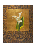 Calla Lily with Arabesque I