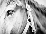 Horseback Riding I