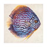 Little Fish I