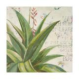 Aloe II