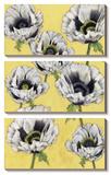 Poppy Vine