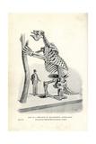 Megatherium Americanum Skeleton Cast