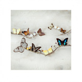 Array of Butterflies
