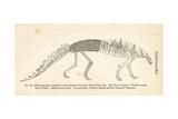 Polacanthus Foxii Skeleton