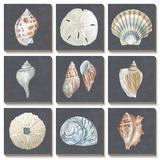 Shells on Slate