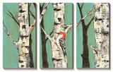 Birch Grove on Teal II
