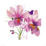 Orchid Blush