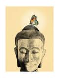 Buddha Tranquil
