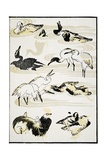 Birds  1817