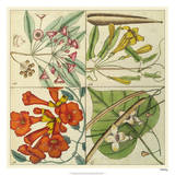 Catesby Botanical Quadrant III