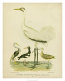 Antique Crane & Heron