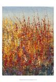 High Desert Blossoms II