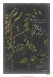 Vintage Botanical Chart VII Giclée par Vision Studio