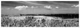 Shore Panorama III