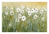 Daisy Spring I