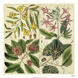 Catesby Botanical Quadrant I
