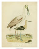 Antique Spoonbill & Sandpipers