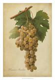 Vintage Vines II