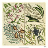 Catesby Botanical Quadrant IV