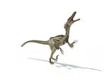 Velociraptor Dinosaur on White Background