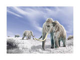 Two Woolly Mammoths in a Snow Covered Field with a Few Bison