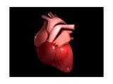 Conceptual Image of Human Heart