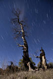 A Partially Burned Tree Backdropped Against Star Trails