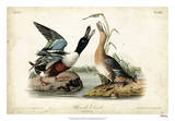 Audubon Ducks I
