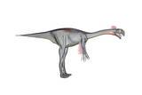 Gigantoraptor Dinosaur  White Background
