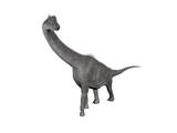 Brachiosaurus Dinosaur  White Background