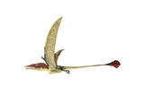 Eudimorphodon Flying Prehistoric Reptile