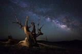 The Milky Way and a Dead Bristlecone Pine Tree in the White Mountains  California