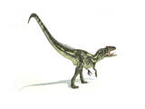 Allosaurus Dinosaur on White Background