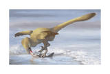 Deinonychus Antirrhopus Preys on a Fish