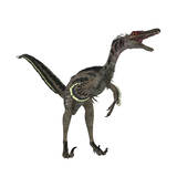 Velociraptor  a Theropod Dinosaur from the Late Cretaceous Period