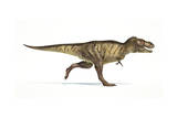 Tyrannosaurus Rex Dinosaur on White Background