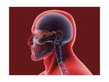 Conceptual Image of Human Eye and Skull