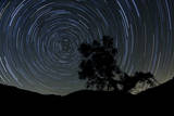 A Lone Oak Tree Silhouetted Against a Backdrop of Star Trails