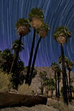 California Fan Palms and a Backdrop of Star Trails in Anza Borrego Desert State Park