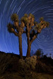 A Joshua Tree Against a Backdrop of Star Trails  California